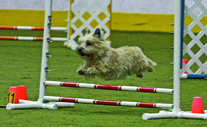 Fox Valley Dog Training Obedience Trial