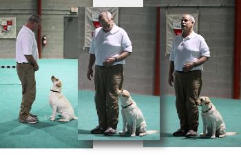 Fox Valley Dog Training Club - Home